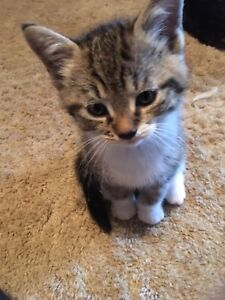 Kittens free to home