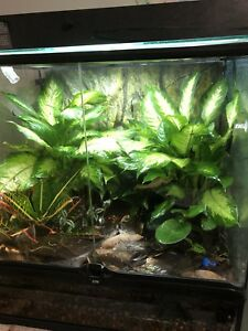 Dart frogs n full setup