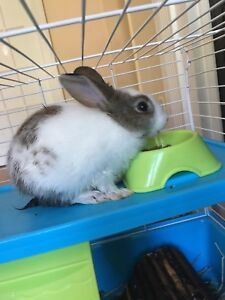 Bunny for sale $20