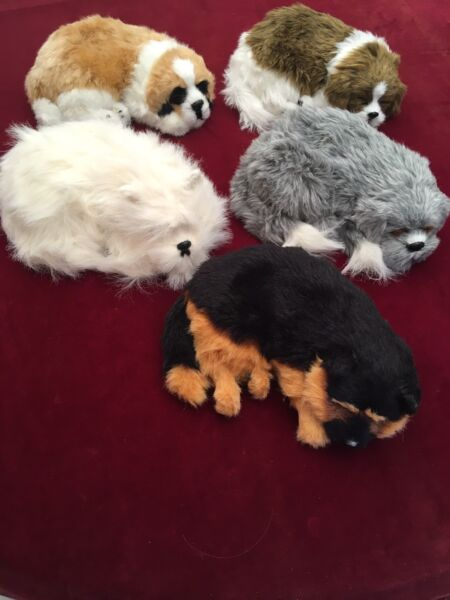 Battery operated toy puppies.
