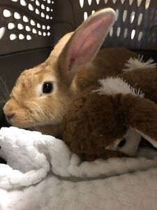 Bunny for adoption