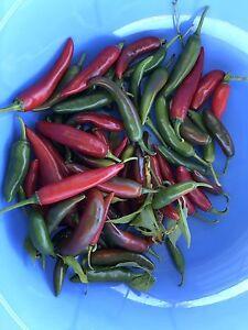 Fresh chilli Panania Bankstown Area Preview