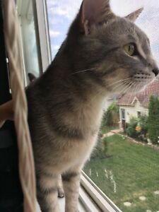 Free cat needs a loving home