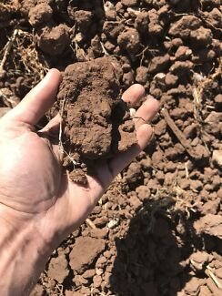 Free Clay Soil No Builders Rubbish Completly Clean