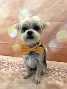 Professional high standard grooming   Tibi's dog grooming
