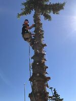 Emergency tree service and dangerous, hazardous tree removal