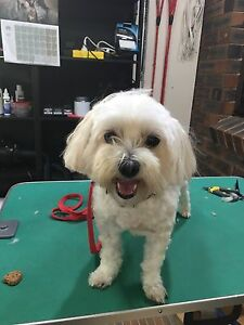 Pet grooming Shailer Park Logan Area Preview