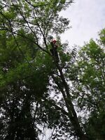 Tree removal, pruning, and more. Reasonable rates