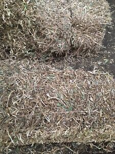 Pea Straw square bales for sale