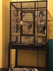 Medium cage and budgie Cooloongup Rockingham Area Preview