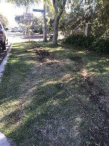 ** FREE *** Buffalo Grass already cut ready to go Balcatta Stirling Area Preview