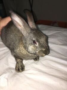 Rabbits! Need a home ASAP!