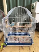 Budgies+ cages for sale Bedford Park Mitcham Area Preview