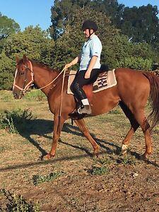 Looking For A Horse To Ride/Lease Bendigo Bendigo City Preview