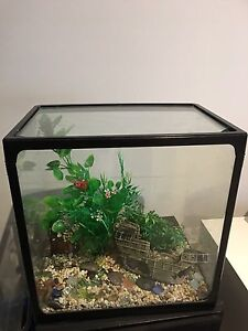 Fish Tank and accessories Mentone Kingston Area Preview