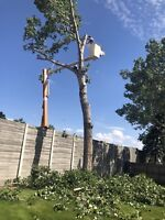 Specialists tree removal call today get 35% discount