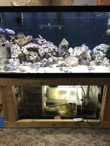 120 g saltwater and sump and extras