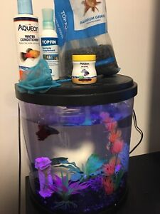 RED BETA FISH/needs care/fin rot