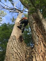 Tree removal and service