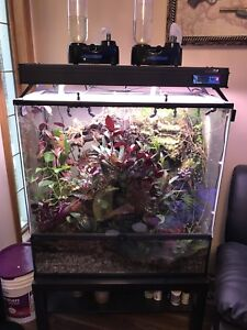 Vivarium with everything and some dart frogs