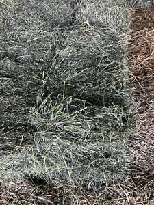 Alfalfa second cut small square bales