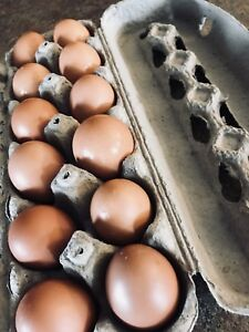 Farm crews eggs