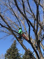 The Tree Whisperer Tree Service and Stump Grinding