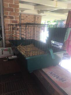 Guinea pigs and guinea pig enclosure