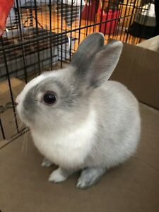 Bunnies for sale! Cheap and ready to go!!
