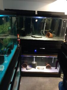55 gallon 2 tanks with custom made wood stand for sell