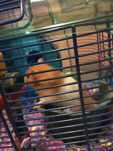 Hamster, Cage & Accessories