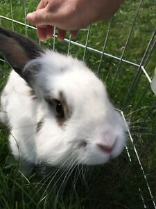 Rehoming a very nice bunny rabbit