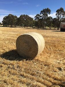 Barley straw round bales (delivery included) Gawler Gawler Area Preview