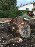 TITAN TREE SERVICES - Free Stump Removal Quotes