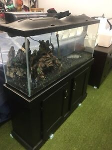 Fish tank and stand 80 gallon