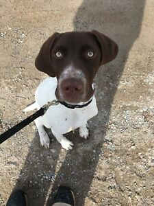 6 month old GSP