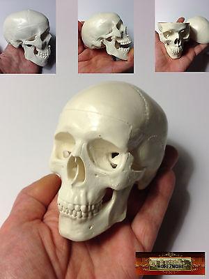 M00428 MOREZMORE Realistic Human Mini Skull 10 cm Art Sculpture Doll Anatomy A60