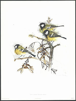 MADS STAGE Yellow Bird TITMOUSE Art WATERCOLOR Print NOS Collectible Artist