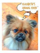 Elizabeth's Animal Eden (Alphington & Fairfield Pet Services) Alphington Darebin Area Preview