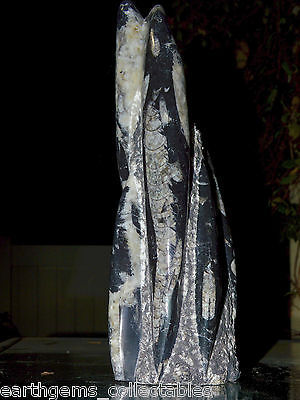 """""""HUGE SIX SPEAR WITH CRYSTAL LACE, GREAT PATTERNS SCULPTURED ORTHOCERAS FOSSIL"""""""""""