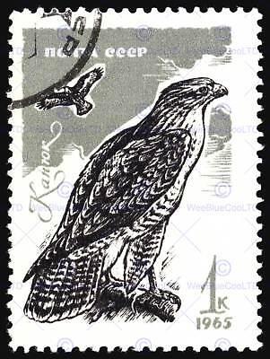 PAINTING BIRDS GOULD LEAR COMMON BUZZARD 12x16/'/' ART PRINT POSTER LAH538B