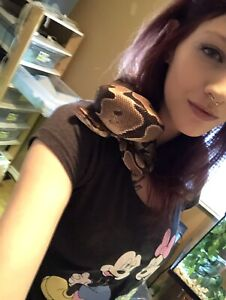 Snakes for rehoming