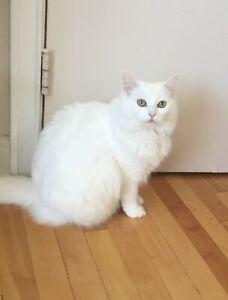 Lost White Cat, CFB Kingston