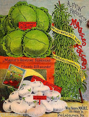 Maule's Cabbage Vintage Vegetable Seed Packet Catalogue Advertisement Poster -