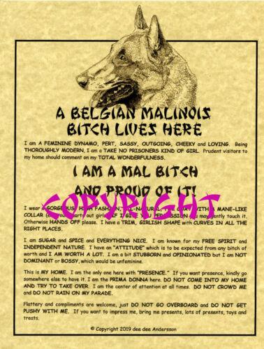 A Belgian Malinois Bit^h Lives Here