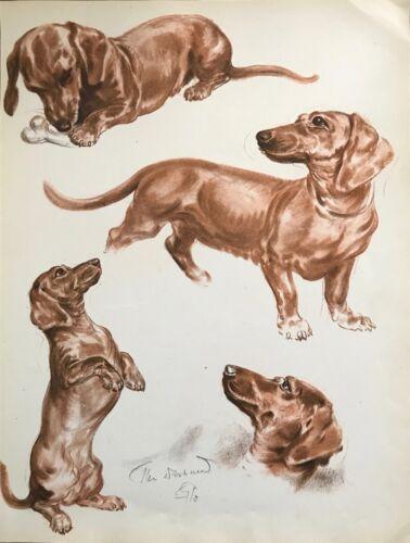 DACHSHUND DOG SKETCHES by Diana Thorne 1944 Art Print