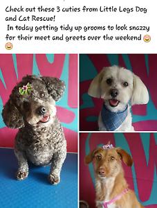 PAWLOVE Dog Grooming Wynnum West Brisbane South East Preview