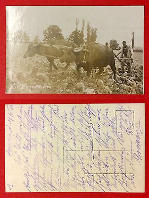 Foto AK MAZEDONIEN 1916 Typen Ochsengespann Pflug   ( 10217