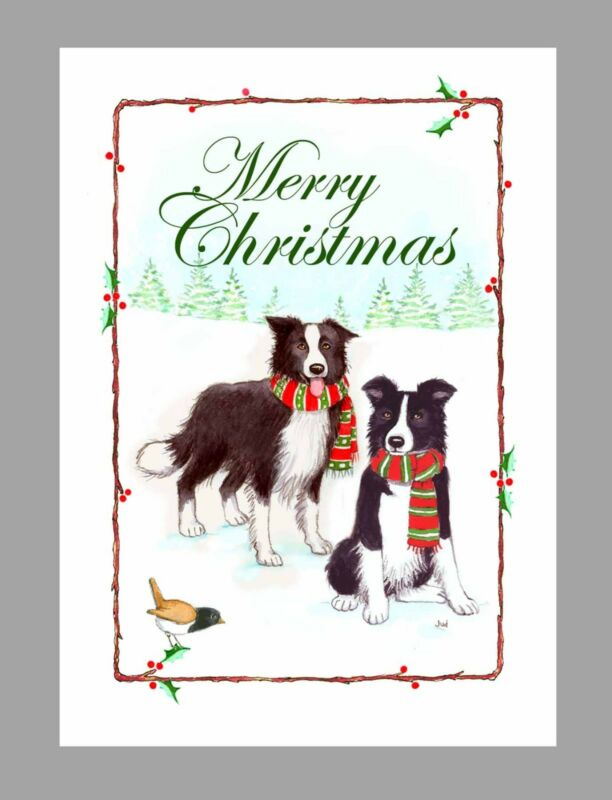 Border Collie Dogs Christmas Cards, Box of 16 Cards & 16 Envelopes