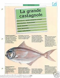"""FICHE FISH Brama brama - Atlantic pomfret Ray's bream Grande castagnole - France - PORT GRATUIT A PARTIR DE 4 OBJETS BUY 4 ITEMS AND WORLDWIDE SHIPPING IS FREE EXCEPT USA, CANADA, AMERICA ONLY TRACKING MAIL FICHE TECHNIQUE, SPECIFICATION SHEET PAPIER GLACÉ, GLAZED PAPER RECTO-VERSO FORMAT 28,5 CM X 22 CM SIZE : 11.22"""" X 8.66""""  - France"""